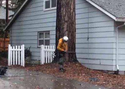 Evanston Certified Arborist on site