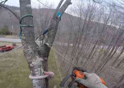 picture of tree cutting by arborist
