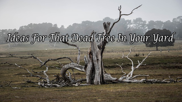 Ideas For That Dead Tree In Your Yard