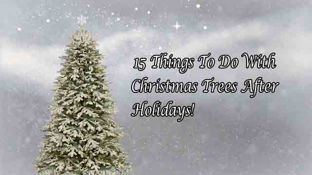 15 Things To Do With Christmas Trees After The Holidays