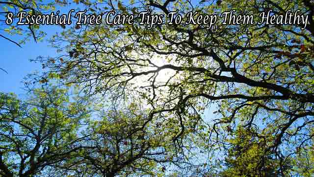 8 Essential Tree Care Tips To Keep Them Healthy