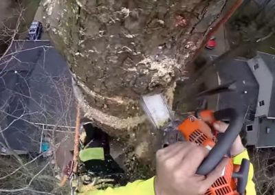 tree removal experts on site